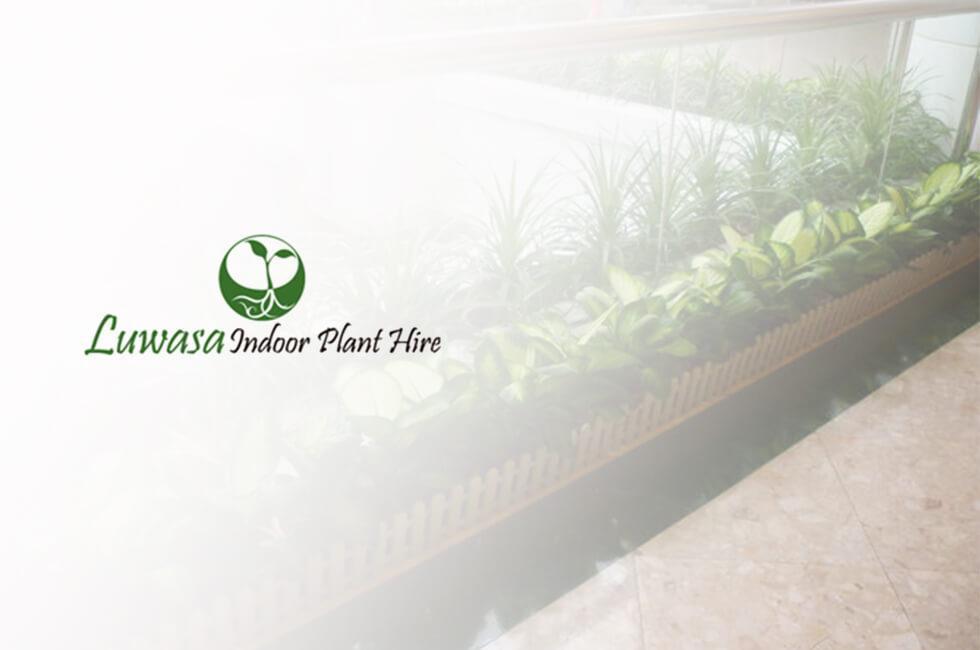Luwasa Indoor Plant Hire Portfolio